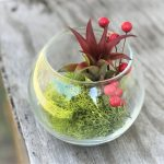 Best Plant Gifts for Gardeners