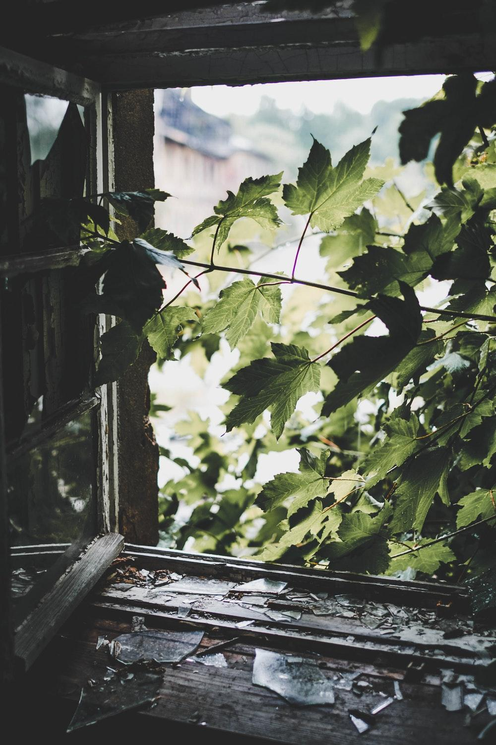 green leafed tree near window
