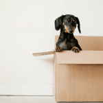 Looking for an In-Home Moving Estimate?