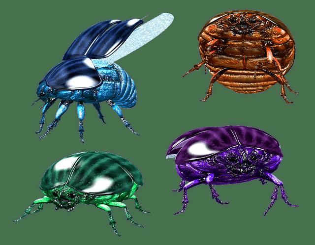 bug, insect, beetle
