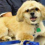 Senior Citizens and Pet Care Expenses